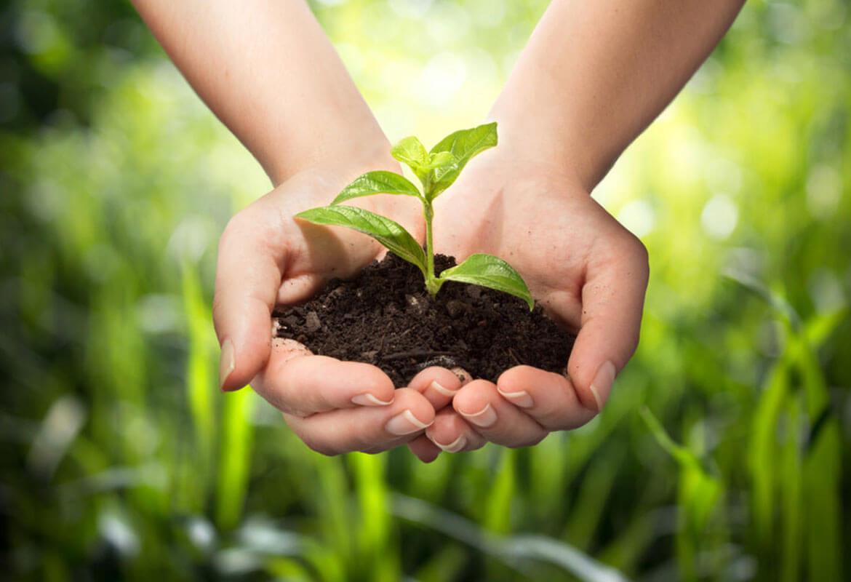 Mains jointes avec terre et pousse de plante