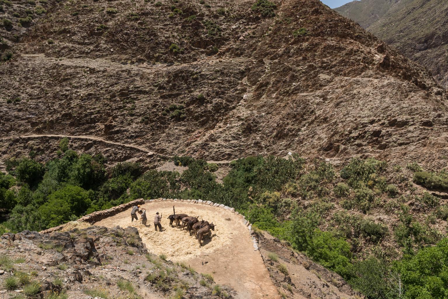 Homme menant son bétail en pâturage au bord d'une falaise